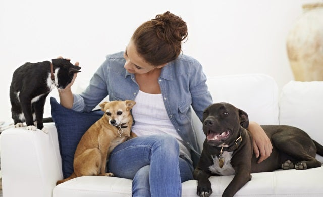 business ideas for 2015 pet sitting startupscouk With the dog sitter