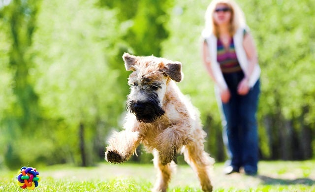 Pet sitting pegged as one of 2015's most profitable business ideas