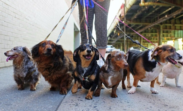 How to start a dog walking business: 4 simple steps