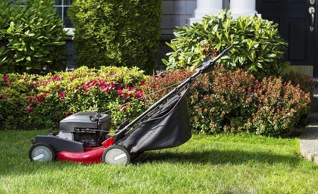 Low risk ways to start a business: Gardening