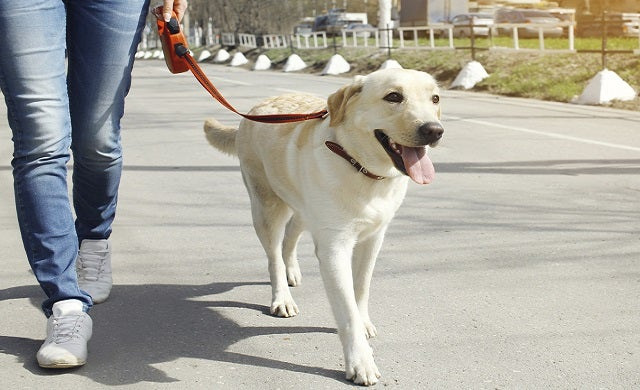 Dog walking license and regulation information