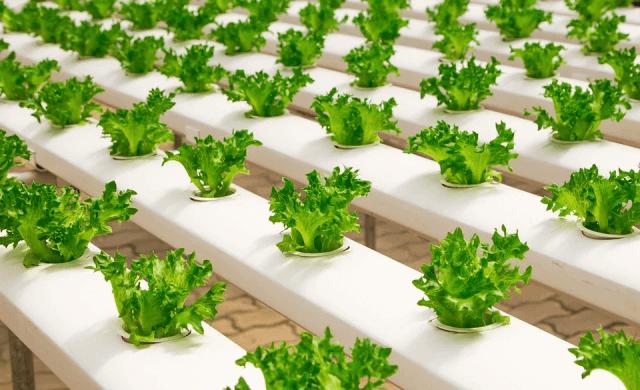 Urban farming solutions