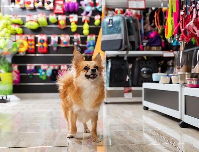 lockdown winners and losers - pet shops